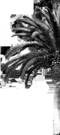 palmtree-half
